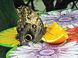Butterfly bright