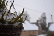 Dorset Snow